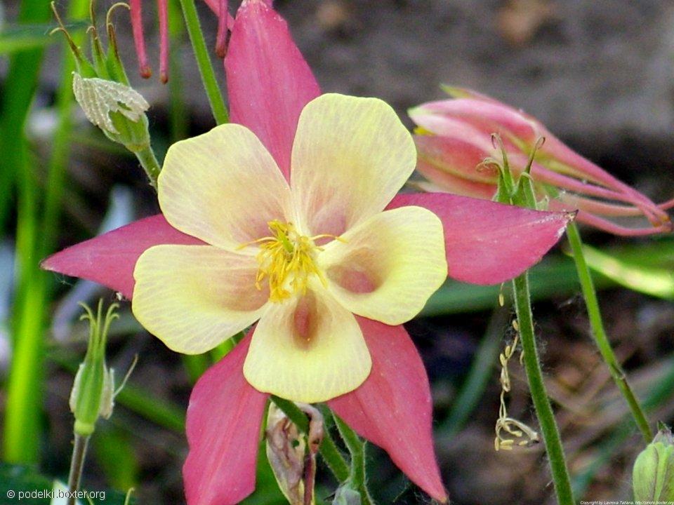 Божественный цветок